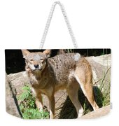 Coyote Grin Weekender Tote Bag