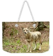 Coyote In Cades Cove Weekender Tote Bag