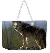 Coyote In Ocotillo Trees Weekender Tote Bag