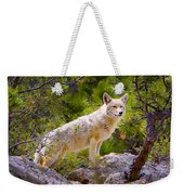 Coyote In The Rocky Mountain National Park Weekender Tote Bag