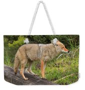 Coyote On A Log Closeup Weekender Tote Bag