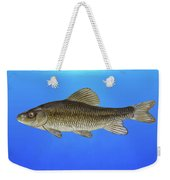 Creek Chubsucker Blue Lagoon  Weekender Tote Bag