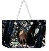 Curious Bambi Weekender Tote Bag