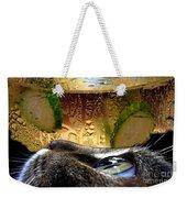 Curious Cat.. Weekender Tote Bag