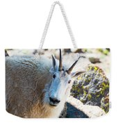 Curious Goat On The Mount Massive Summit Weekender Tote Bag