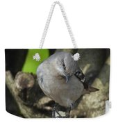Curious Mockingbird Weekender Tote Bag