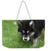 Curiousity Filled Look In The Face Of An Alusky Weekender Tote Bag