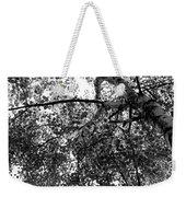 Curving Birch Bw Weekender Tote Bag