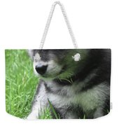Cute Alusky Puppy Dog Sitting In Green Grass Weekender Tote Bag