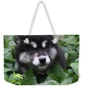 Cute Alusky Puppy In A Bunch Of Plant Foliage Weekender Tote Bag