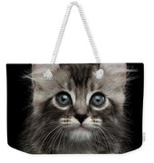 Cute American Curl Kitten With Twisted Ears Isolated Black Background Weekender Tote Bag