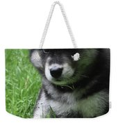 Cute Fluffy Alusky Puppy Sitting Up In A Yard Weekender Tote Bag