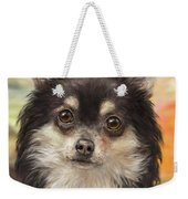 Cute Furry Brown And White Chihuahua On Orange Background Weekender Tote Bag