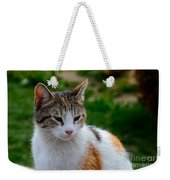 Cute Grey White And Orange Cat Poses And Gazes Weekender Tote Bag