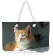 Cute Orange Kitten With Large Paws In Sunny Day Weekender Tote Bag