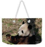 Cute Panda Bear Eating A Green Shoot Of Bamboo Weekender Tote Bag