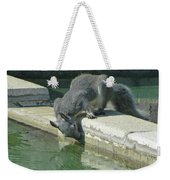 D2b6341-dc Gray Squirrel Drinking From The Pool Weekender Tote Bag