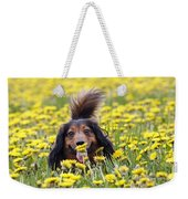 Dachshund On A Meadow In Bloom Weekender Tote Bag