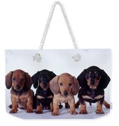 Dachshund Puppies  Weekender Tote Bag by Carolyn McKeone and Photo Researchers