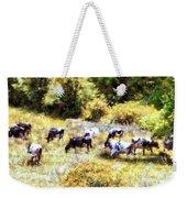 Dairy Cows In A Summer Pasture Weekender Tote Bag by Janine Riley