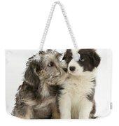 Dandy Dinmont Terrier And Border Collie Weekender Tote Bag