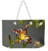 Dark Red Day Lily With Sun Shining Through I Weekender Tote Bag