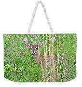 Deer Bedded Down In Grass Weekender Tote Bag