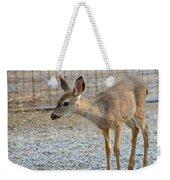 Deer Fawn - 2 Weekender Tote Bag