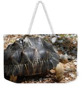 Desert Turtle With An Unusual Shell In The Wild Weekender Tote Bag