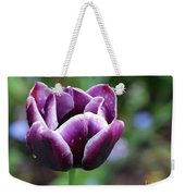 Dew Clinging To The Petals Of  A Tulip Blossom Weekender Tote Bag