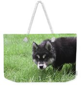 Dew Drops On The Nose Of An Alusky Puppy Dog Weekender Tote Bag
