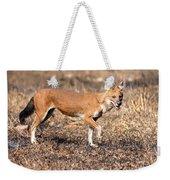 Dhole In The Wild Weekender Tote Bag