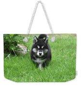 Dinstinctive Black And White Markings On An Alusky Pup Weekender Tote Bag