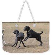 Dog 382 Weekender Tote Bag