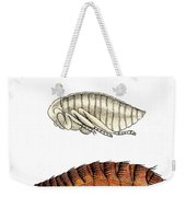 Dog Flea, Lifecycle, Illustration Weekender Tote Bag