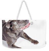 Dog Looking Up To Pet Copyspace Weekender Tote Bag