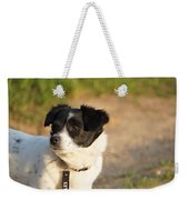 Dog On Sun Weekender Tote Bag