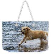 Dog Running On Shallow Lake Shore Weekender Tote Bag