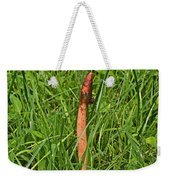 Dog Stinkhorn Mushroom - Mutinus Caninus Weekender Tote Bag