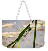 Dragonfly Resting Upside Down Weekender Tote Bag