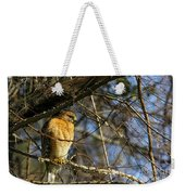 Early Morning Still Hunting  Coopers Hawk Art Weekender Tote Bag