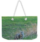 Eastern Coyote In Grass Weekender Tote Bag