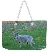 Eastern Coyote In Meadow   Weekender Tote Bag