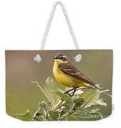 Eastern Yellow Wagtail Weekender Tote Bag