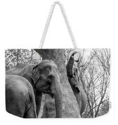 Elephant Tree Black And White  Weekender Tote Bag