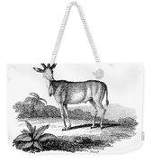 Elk Antelope Weekender Tote Bag