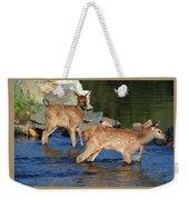 Elk Calf Crossing River 1 Weekender Tote Bag