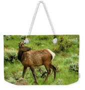 Elk Doe Weekender Tote Bag