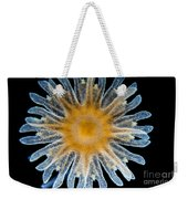 Ephyra Of A. Aurita Jellyfish, Lm Weekender Tote Bag