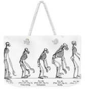 Ernst Haeckel, Evolution Of Man, 1879 Weekender Tote Bag